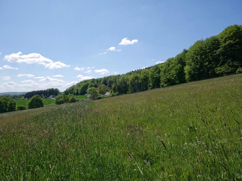 Wir gehen am Hang des Teutos entlang und können hier weit in die Landschaft blicken.