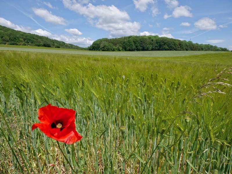 Vor allem landwirtschaftlich genutzte Flächen durchstreifen wir auf dem Panoramaweg Borgholzhausen.