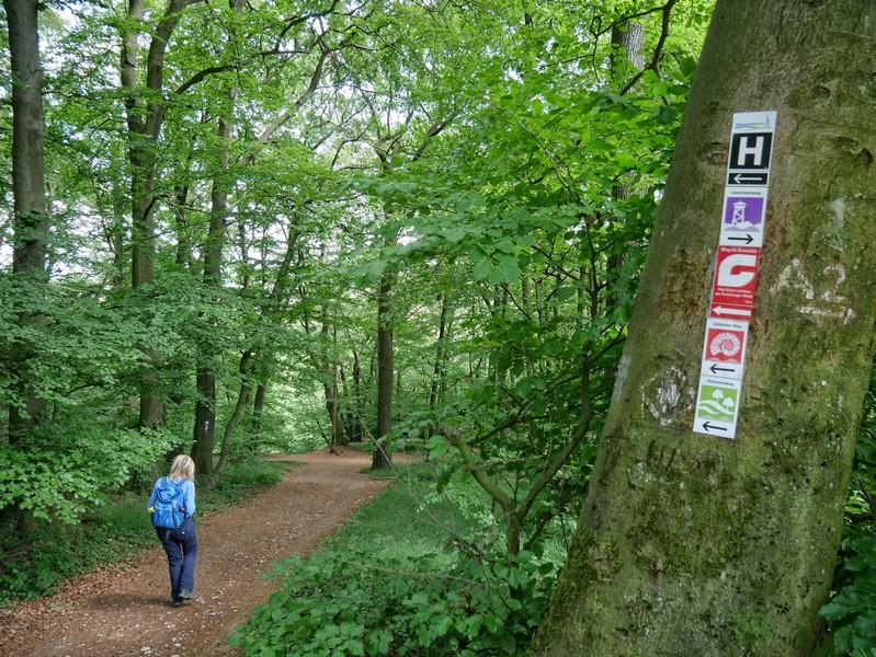 In Borgholzhausen sind neben dem Panoramaweg erst vor Kurzem mehrere neue, bestens ausgeschilderte Wanderwege entstanden. Den Klassiker Hermannsweg treffen wir aber natürlich auch hier!