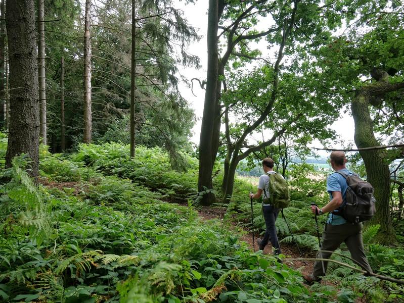 Die Wege auf der Drei-Burgen-Route sind abwechslungsreich und ein echter Wandergenuss.