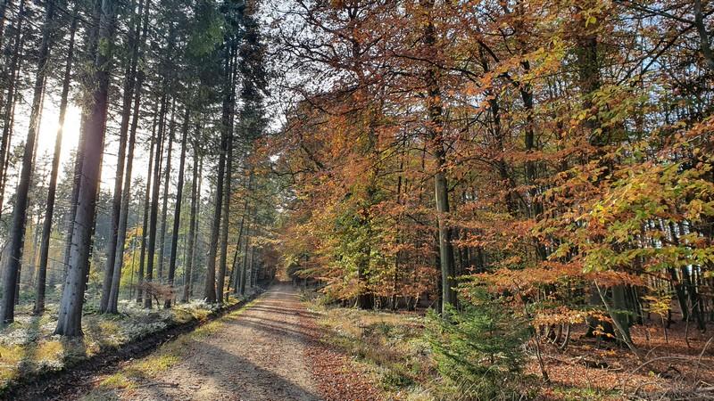 Lange, gerade Forstwege bestimmen nun das Bild auf dem Eselspatt.
