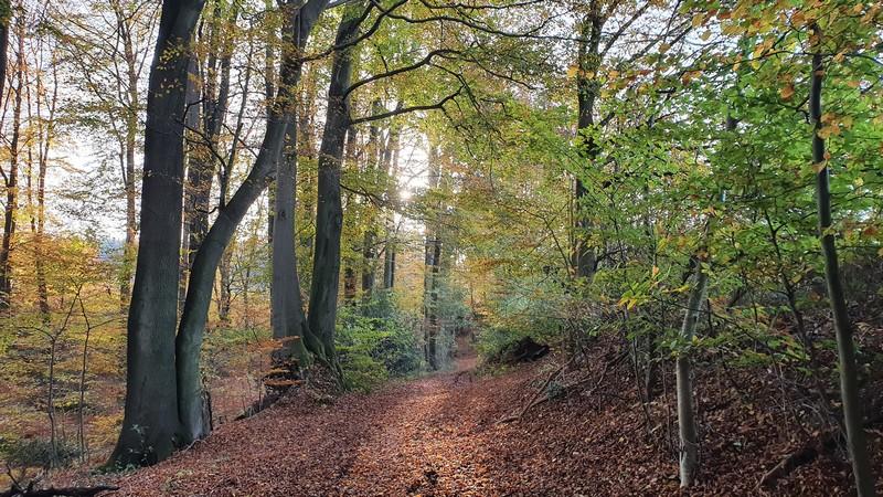 Idyllische, ruhige Waldwege führen uns weiter Richtung Tecklenburg.