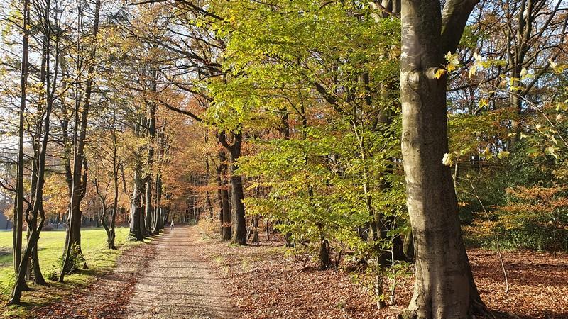 Die letzten Kilometer auf dem Eselspatt bis ins Herz Tecklenburgs machen besonders viel Laune.