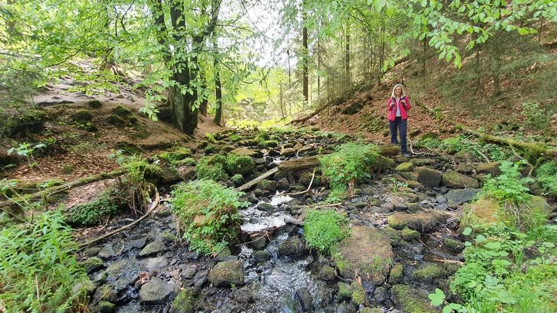 Im Flussbett liegt der Osningsandstein und hier grünt es auch.