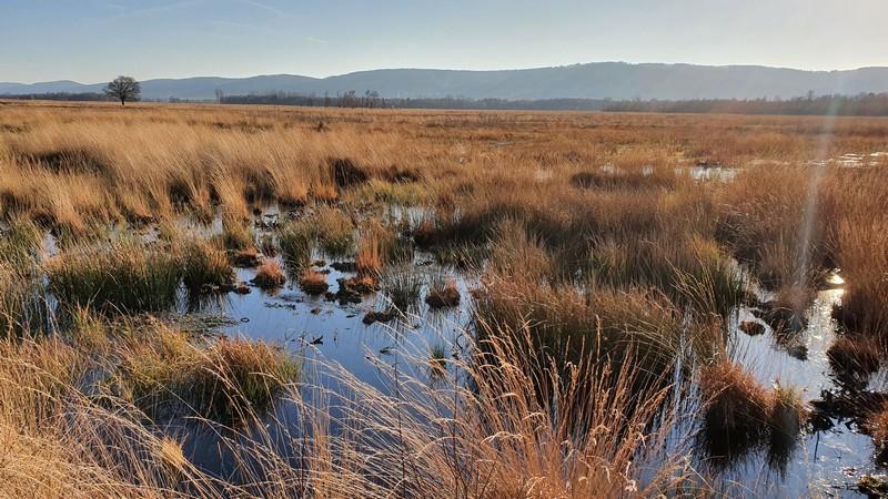 Seit 50 Jahren läuft die Wiedervernässung im Großen Torfmoor - mit Erfolg!