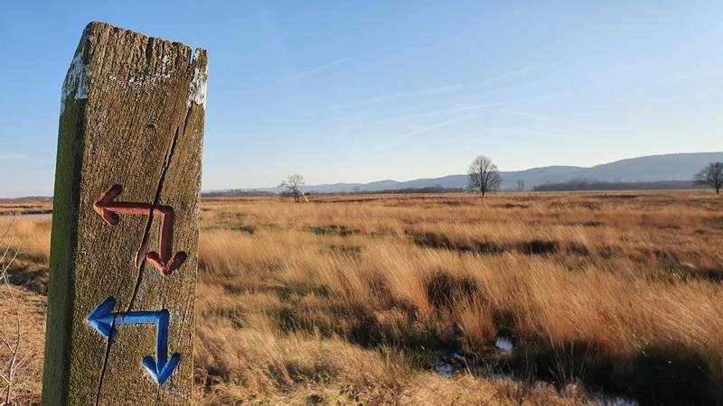 Mit diesen Pfeilen sind die Rundwanderwege im Hiller Torfmoor ausgeschildert. Wir folgen vor allem dem größten Rundwanderwege, der mit den roten Pfeilen markiert ist.