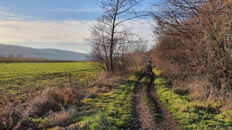 Das Große Torfmoor geht hier allmählich in grünere Weiden über.