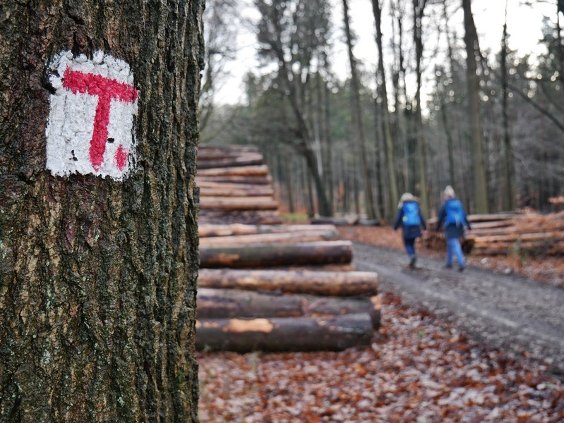 Die rotweiße Markierung führt uns sicher auf unserer Wanderung auf dem TERRA.track Schwarzer Brink.