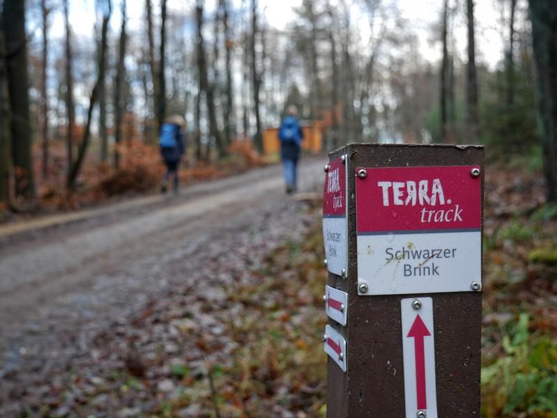 Vorrangig breite Forstwege und -straßen begleiten uns auf dem TERRA.track Schwarzer Brink.