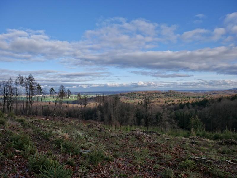 Auf dem Schwarzen Brink hat der Wald gewaltig Federn lassen müssen. Uns beschert das eine freie Sicht über das Mindener Land.