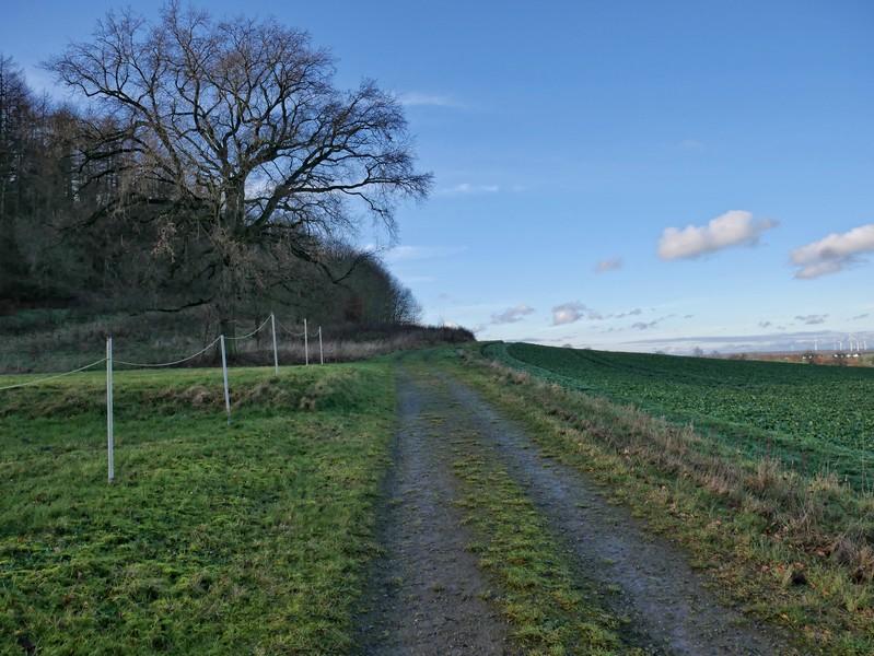 Der Hangweg ermöglicht unsere weite Blicke über Lintorf und Umgebung.