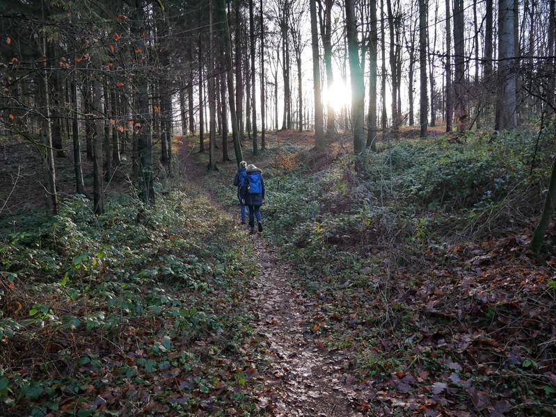 Auf schmalen Pfaden erkunden wir das Waldgebiet.