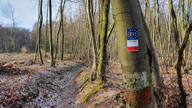 Wir begegnen dem Wittekindsweg und dem europäischen Fernwanderweg E11. Beide begleiten uns nun über den Kamm zurück.