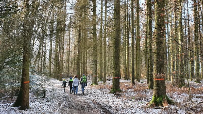 Eher breite Wanderwege prägen den Wittekindsweg. Viele Bäume am Wegesrand werden schon bald nicht mehr stehen.
