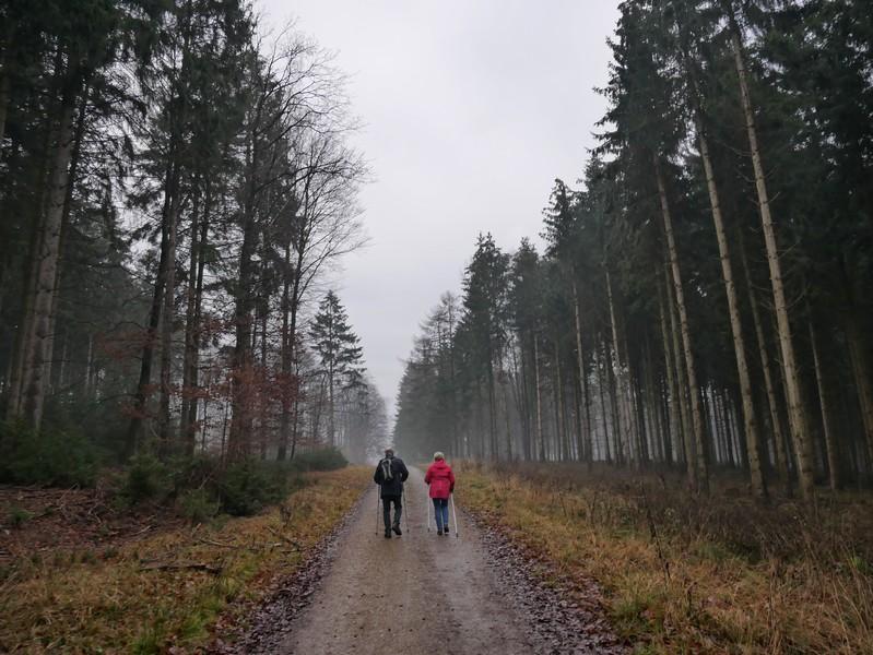 Teil recht steil bergauf, immer aber schnurgerade geht es weiter bis zur Krebsburger Hütte.
