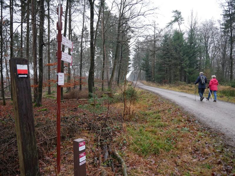 Auch der Wittekindsweg, dessen Markierung hier links zu sehen ist, begleitet uns heute mehrmals auf dem TERRA.track Teufelssteine.