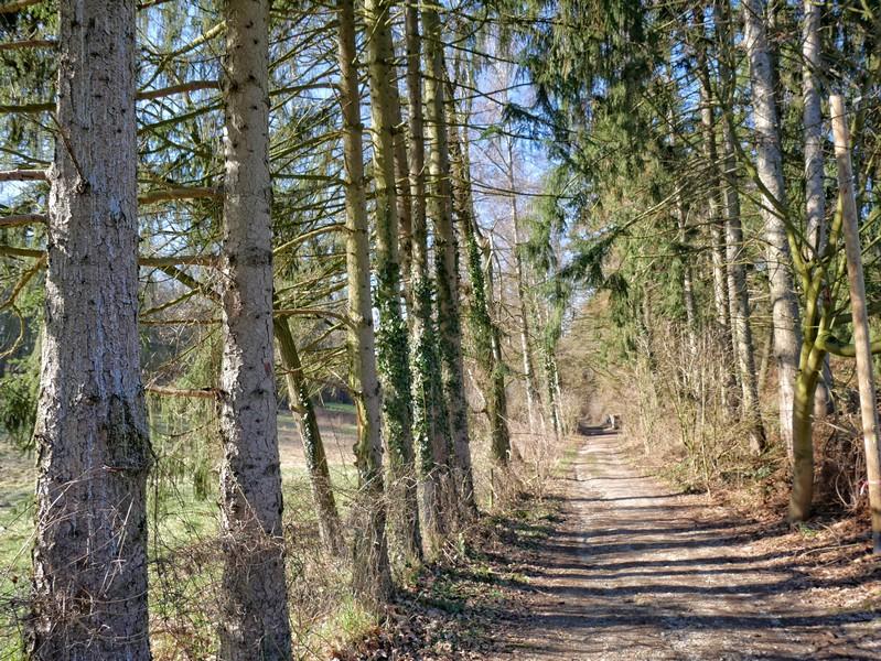 Die Streckenführung auf dem Bergweltenweg bleibt abwechslungsreich.