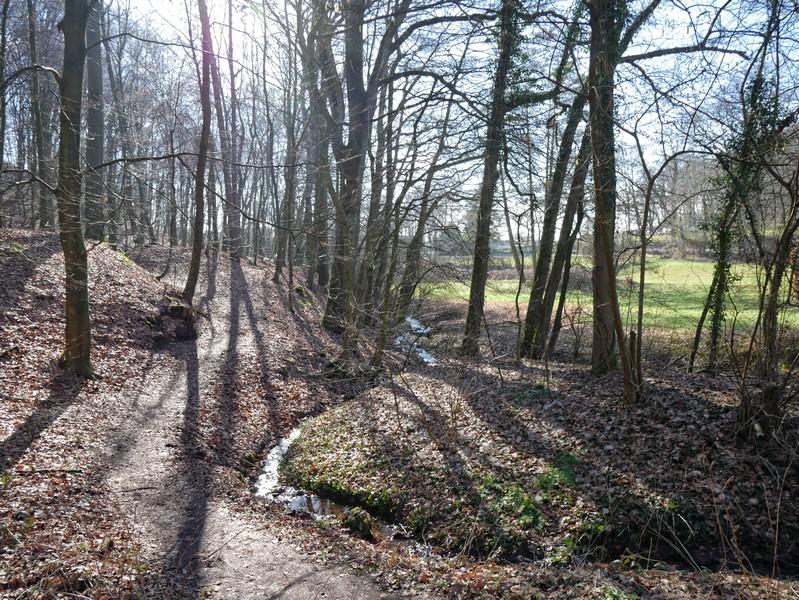 Der Jückemühlenbach begleitet unseren Bergweltenweg ein Stück.
