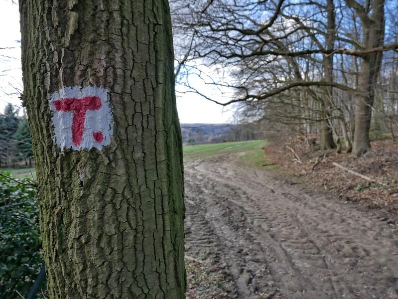 An den Bäumen ist der TERRA.track Dorftraum mit dem bekannten roten T auf weißem Grund markiert.