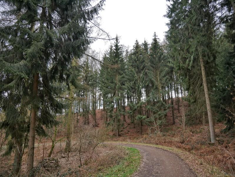 Ein kurzer Abschnitt durch den lichten Wald. Auch im näheren Umkreis hat der Borkenkäfer den Gehölzen arg zugesetzt.