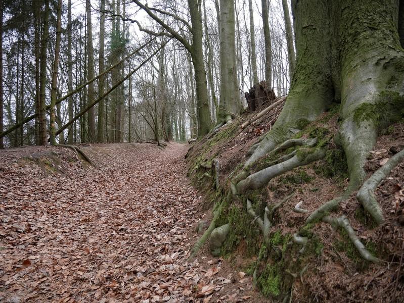 Immer wieder verläuft der TERRA.track Dampfross auch über Hohlwege, die davon zeugen, dass diese Pfade schon lange bestehen...