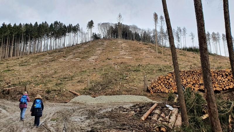 Dieses Bild ist aus dem Frühjahr 2021. Es steht zu befürchten, dass viele Hänge im Wiehengebirge in den nächsten Jahren ähnlich aussehen werden.