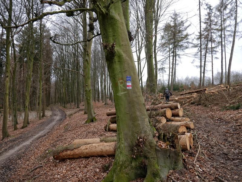 Während sich der E11 und der Wittekindsweg nach rechts ins Unterholz schlagen, halten wir uns besser links und folgen dem breiteren Kammweg.