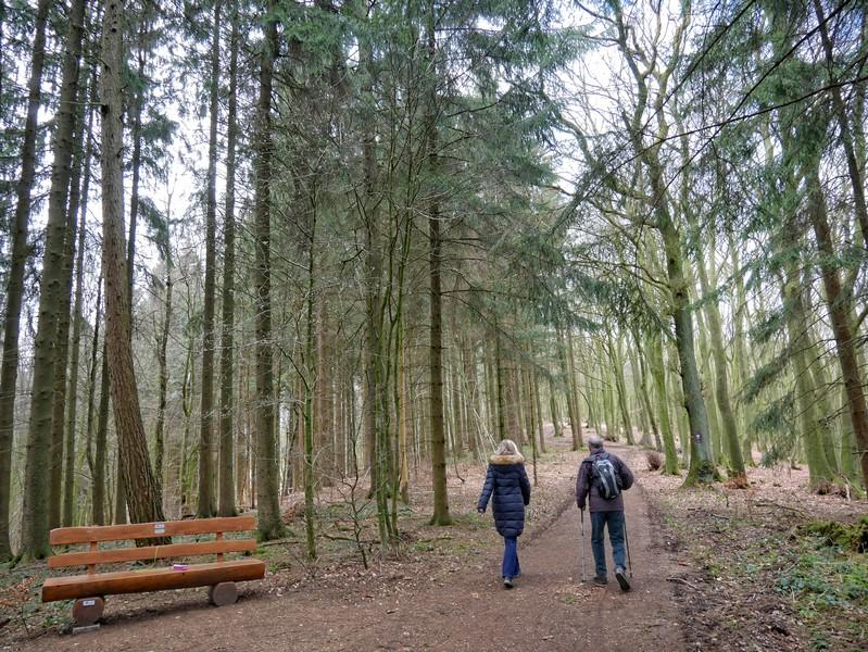 Lichte Wälder, breite Wege - knapp zwei Kilometer gehen wir entspannt über den Höhenzug des Wiehengebirges.