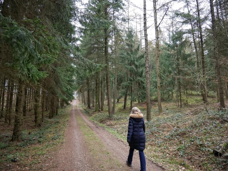 Breite, wie mit der Schnur gezogene Forstwege und Fichtenwälder - das ist grob gesagt die Rahmenhandlung für den TERRA.track Schmittenhöhe.