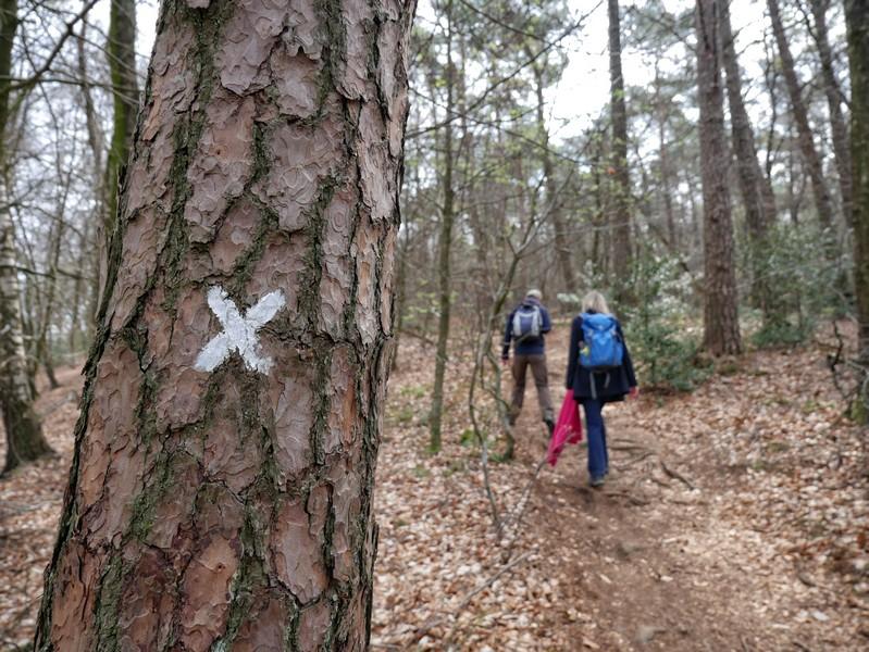 Das weiße X ist die Wegmarkierung der Hauptwanderwege des Westfälischen Heimatbundes.