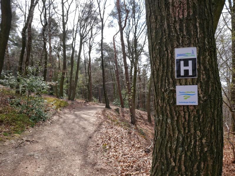 Wir folgen abermals dem Hermannsweg und hier auch der Teutoschleife Tecklenburger Bergpfad.