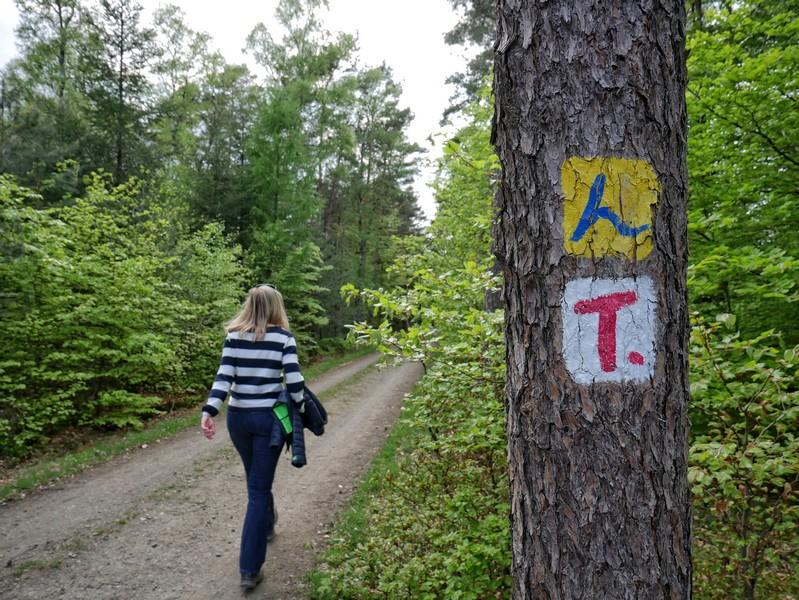 Auch auf dem Höhenzug wird der TERRA.track Penter Egge vom Hünenweg begleitet. Und von uns natürlich!