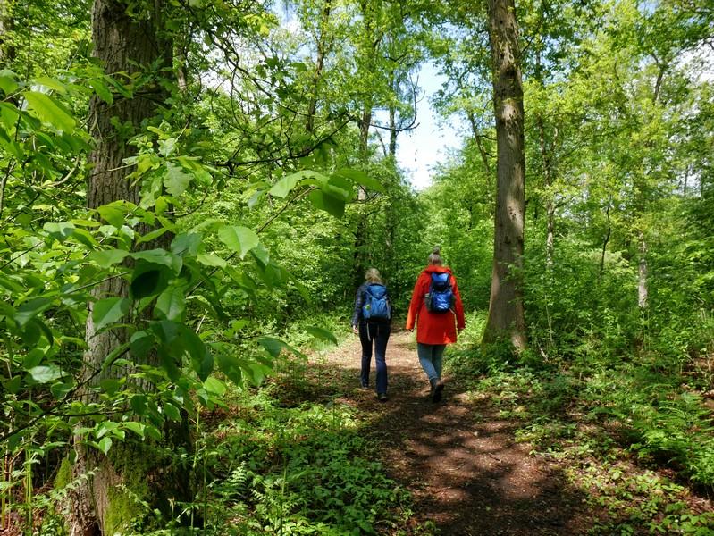 Stille Wälder, idyllische Pfade - die Bockholter Berge sind ein wahres Naturparadies.