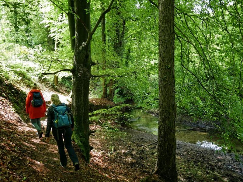Schon nach kurzer Zeit erreichen wir den Gellenbach und wandern ganz nach an seinem Flussbett.