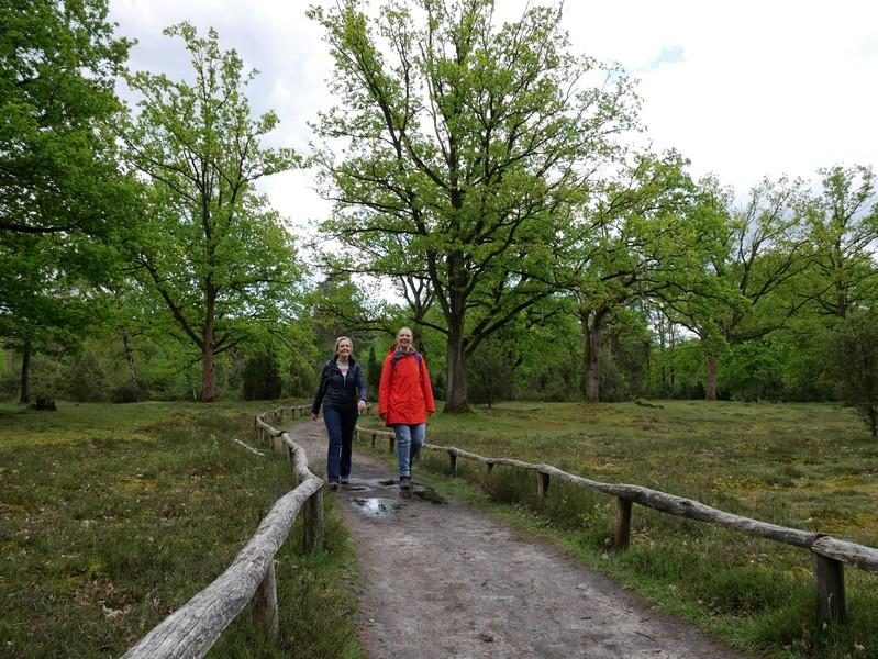 Die Guntruper Heide nimmt uns mit Wanderwegen wie aus dem Bilderbuch in Empfang.