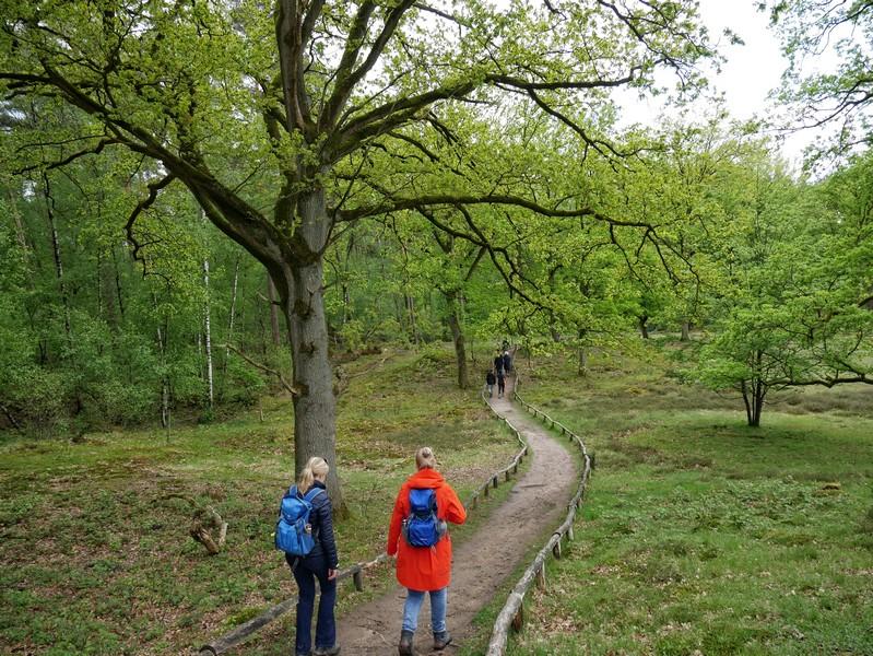 Die letzten Wandermeter in der Guntruper Heide...