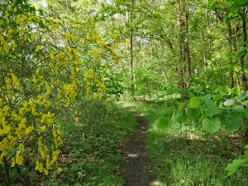 Paradiesische Zustände auch auf den Wanderwegen im Boltenmoor.