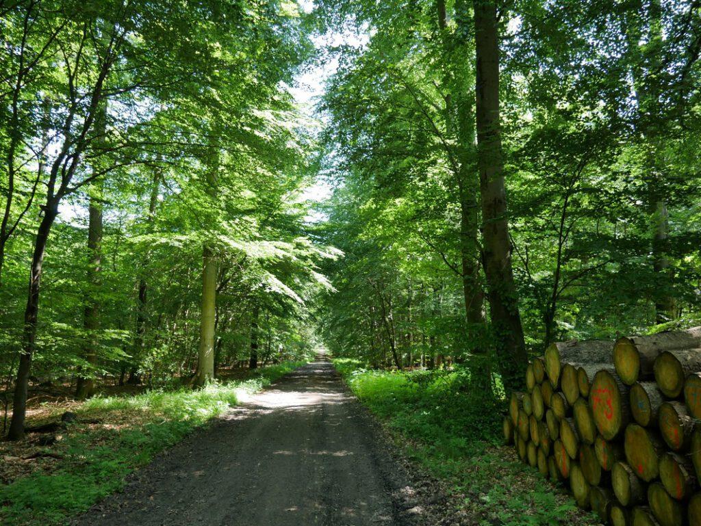 Der Habichtswald ist von der Forstwirtschaft geprägt - das gilt hier auch für unseren Gießkannenweg.