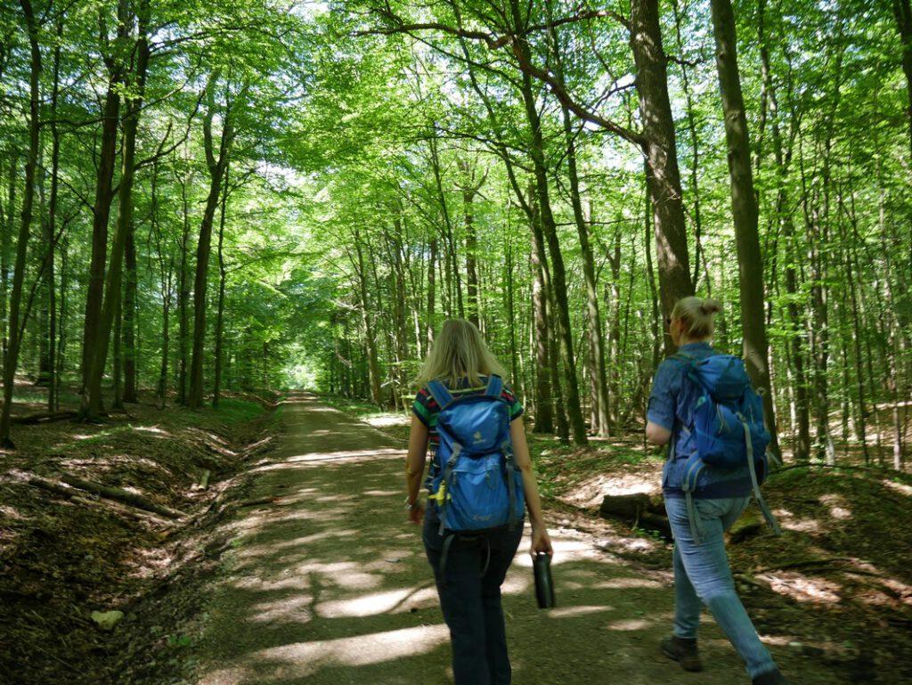 Lange gerade Forstwege prägen das Bild im Habichtswald.