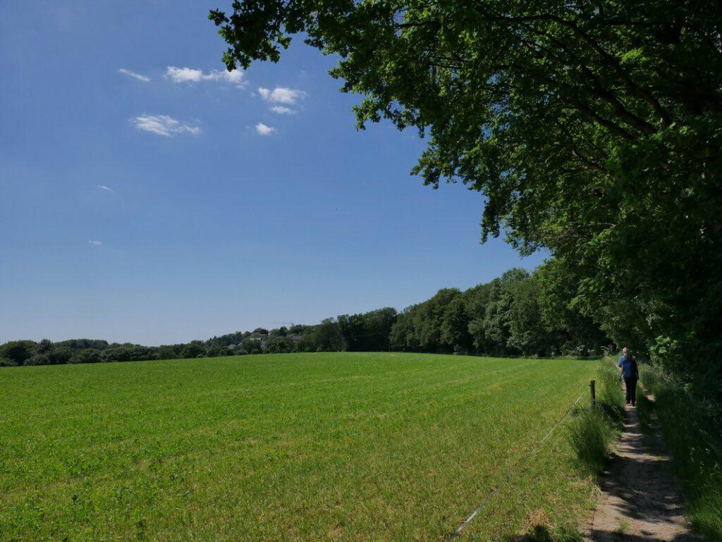 Der kleine Pfad entlang der Grafenstraße zieht sich zwar ein wenig, ist aber trotzdem angenehm zu wandern.