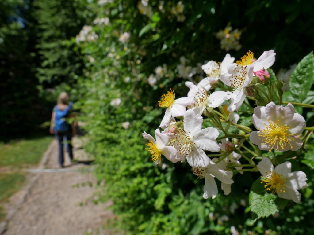 Ein kleines Stück wandern wir auch durch den Kurpark, den wir von früheren Wanderungen schon gut kennen.