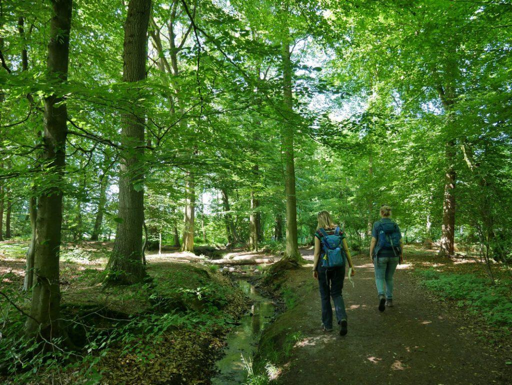 Ein kleiner Bach begleitet unseren Geißkannenweg ein kleines Stück durch den Wald.